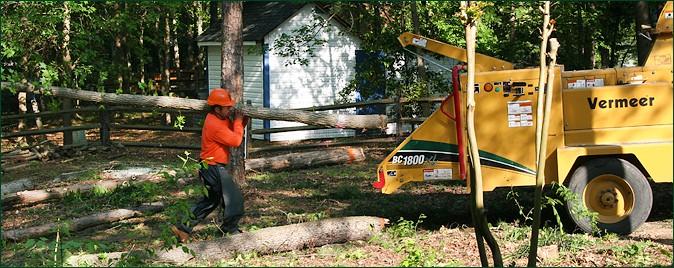 Tree Care Equipment