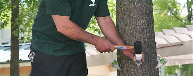 Trunk Injection / Trunk Inoculation
