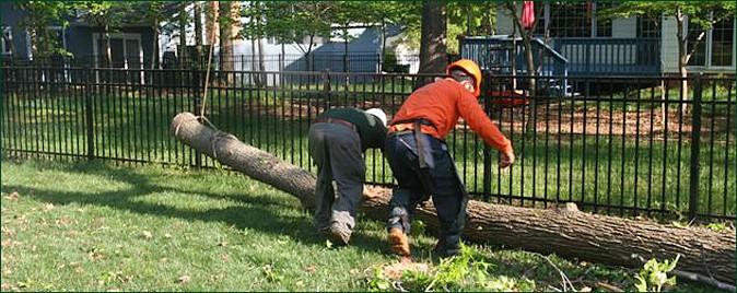Tree Removal, Tree Cutting, Charlotte, NC