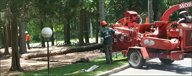 Tree Removal, Tree Cutting, Charlotte, NC