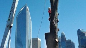 Commercial Tree Service