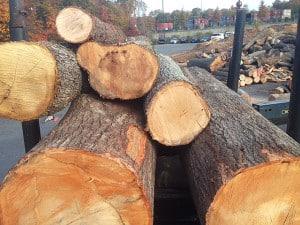 Urban Forest Wood Utilization