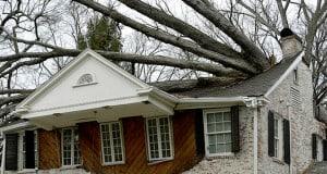 Senior Trees AAA Tree Experts
