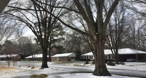 Ice Trees AAA Tree Experts