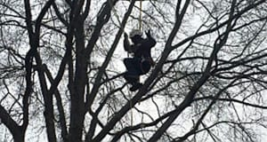 Tree Climbers from AAA Tree Experts, Inc.