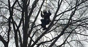Tree Climbers from AAA Tree Experts, Inc.