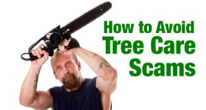 Avoid Tree Care Scams