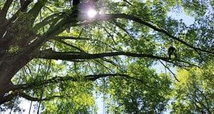 Tree Service AAA Tree Experts