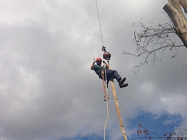 AAA Tree Experts Crane Tate Way