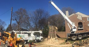AAA Tree Experts Professional Tree Care Crane
