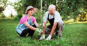Tree Care Planting Myths