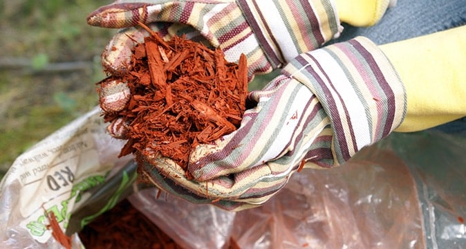 How-to-properly-mulch-a-tree