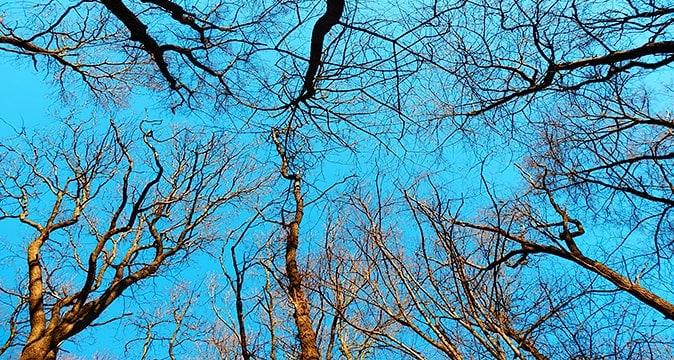 Tree Trimming, Tree Pruning, Charlotte NC
