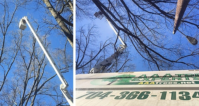 Tree trimming and pruning in Charlotte NC