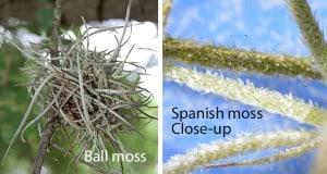 Tree-De-mossing