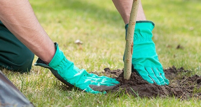 Tree Planting and Health Care