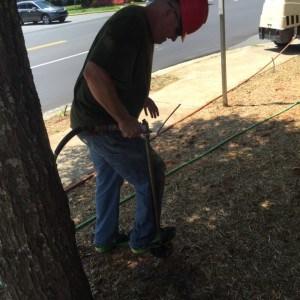 root excavation 5