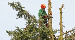 Tree Topping Services Charlotte