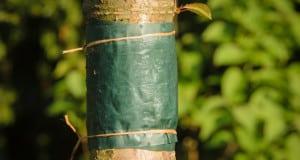 tree banding charlotte