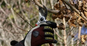 Dormant Tree Pruning