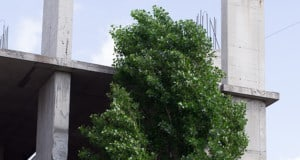 Keep Safe Trees from Construction Damage