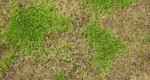 Lawn Maintenance in Charlotte