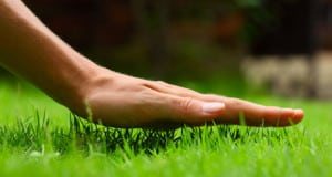 Guide to keep your lawn lush green