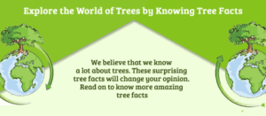 UNBELIEVABLE TREE FACTS