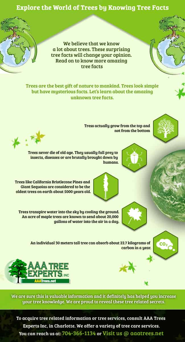 UNBELIEVABLE TREE FACTS